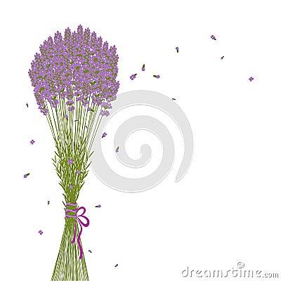 Purple Lavender Flower Background