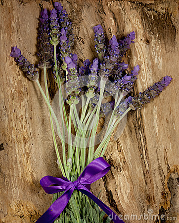 Purple lavender flowers on bark