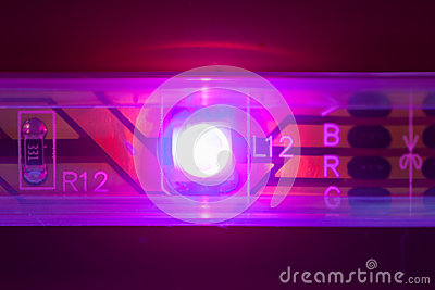 Purple led light