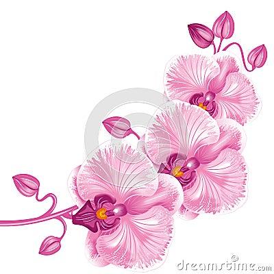 Free Purple Orchid Stock Photos - 23487773