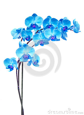 Free Purple Orchid Branch Stock Photo - 48893470