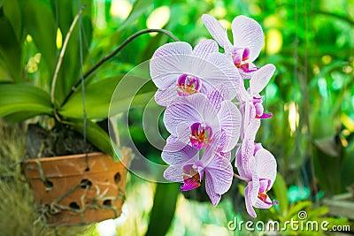 Purple Orchid flower, beautiful