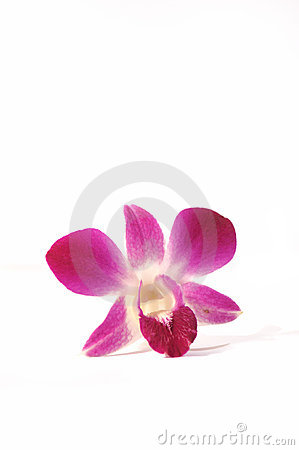 Free Purple Orchid Series 1 Stock Photo - 5294180