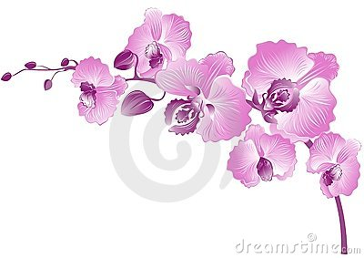 Purple orchid. Vector illustration