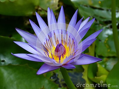 Purple Petaled Flower Near Green Leaf Plant Free Public Domain Cc0 Image