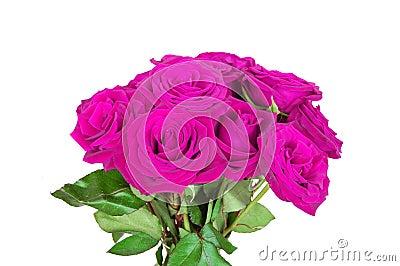 Purple/pink roses