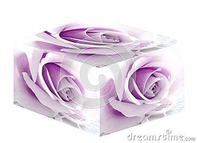 Purple Rose Box