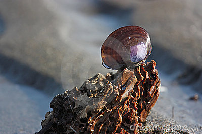 Purple shell on a relaxing rippled sand beach