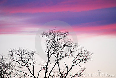 Purple Sky over trees