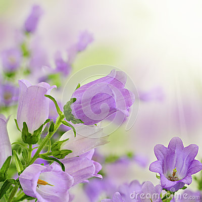 Purple spring summer flowers on bokeh background