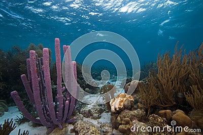Purple Stove pipe sponges