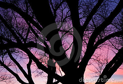 Purple sunset over trees