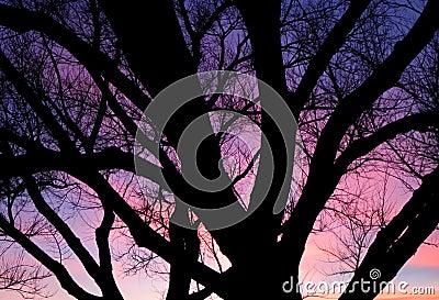 Purple sunset over trees