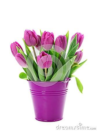 purple tulips in bucket stock images image 13343634