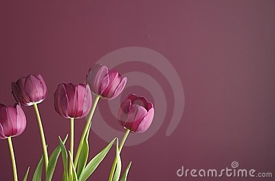 Purple tulips on purple 4