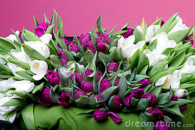 Purple and white tulips on black chair