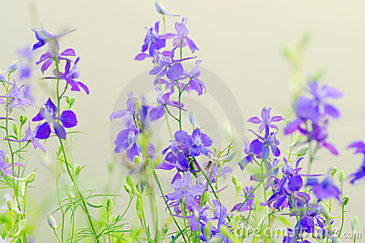 Purpurrote wilde Blumen