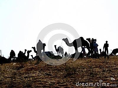 Pushkar Editorial Photography