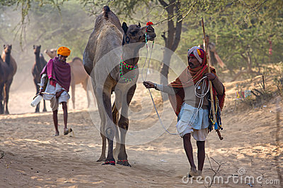 Pushkar Camel Mela (Pushkar Camel Fair) Editorial Photo