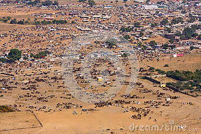 Pushkar Camel Mela (Pushkar Camel Fair) Editorial Stock Photo