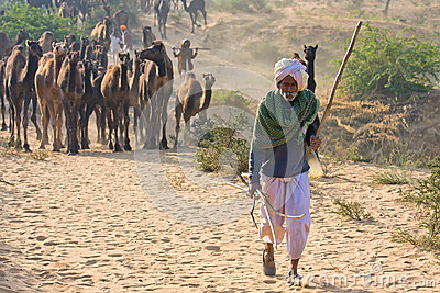 Pushkar Camel Mela (Pushkar Camel Fair) Editorial Stock Image