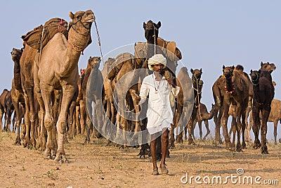 Pushkar Camel Mela (Pushkar Camel Fair) Editorial Stock Photo