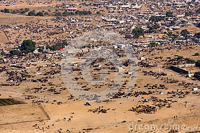 Pushkar Camel Mela ( Pushkar Camel Fair ) Editorial Image
