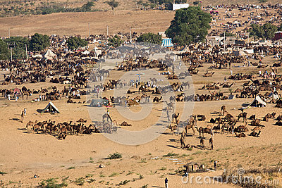 Pushkar Camel Mela ( Pushkar Camel Fair ) Editorial Stock Image
