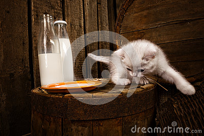 Pussy cat with milk