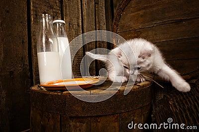Pussy cat with milk