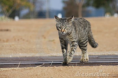 Pussy cat on the prowl!