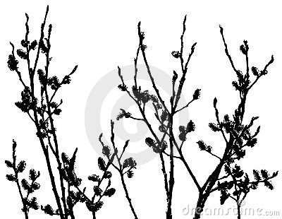 Pussy-Willow Silhouette