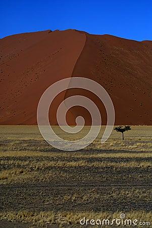 Pustynny namib