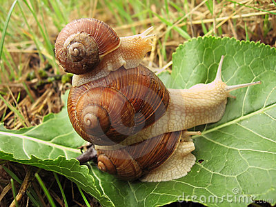Pyramid of three snails
