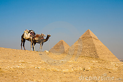 Pyramids Cheops Khafre Camels Waiting