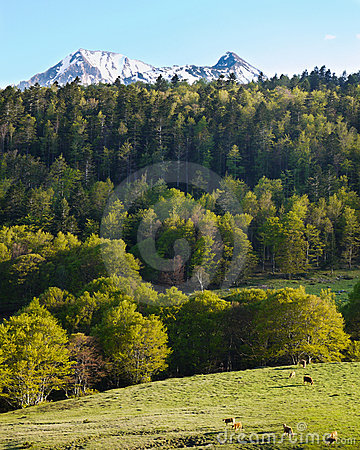 Pyrenean landscape scenery