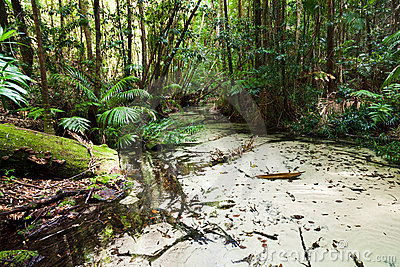 QE Rainforest Creek Hor
