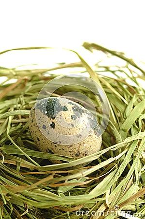 Free Quail Egg Royalty Free Stock Photos - 12306798