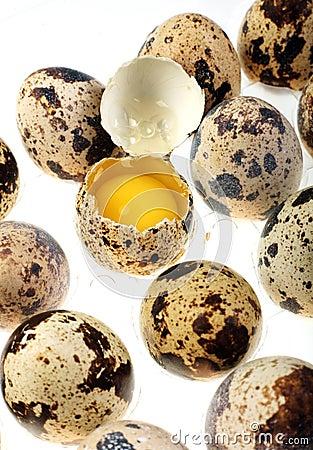 Free Quail Egg Stock Image - 3998461
