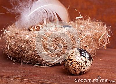 Quail egg near the nest with eggs
