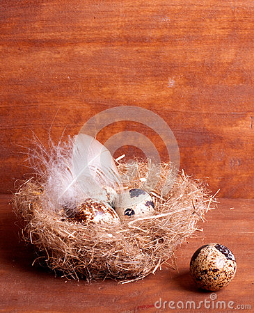 Quail egg near the nest with eggs