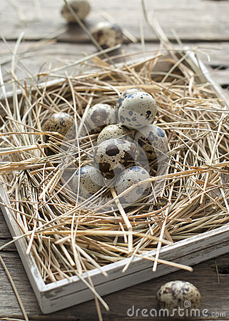 Free Quail Eggs Easter Royalty Free Stock Photos - 29230018