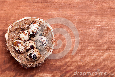 Quail eggs in the nest of a view from the top