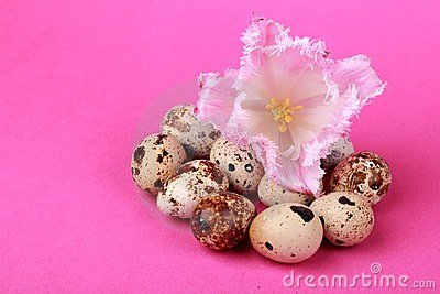 Quail eggs with tulip