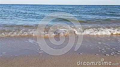 Quallen wuschen sich oben auf dem Strand, die Medusa, die durch die Wellen auf dem Strand geworfen wurde stock footage