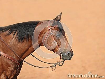 Quarter Horse Profile