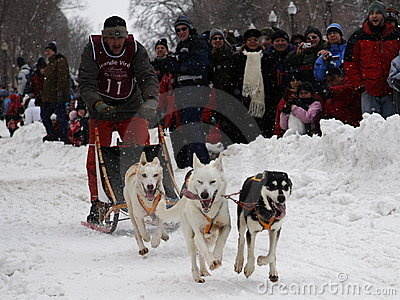 Quebec Carnival: Dog sled Race Editorial Stock Image