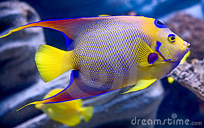 queen-angelfish-1-5394829.jpg