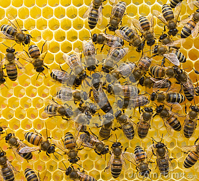 Free Queen Bee And Bees Royalty Free Stock Image - 96594586