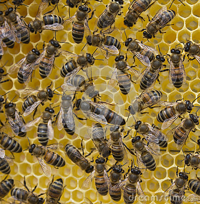 Free Queen Bee And Bees Royalty Free Stock Photo - 96594745
